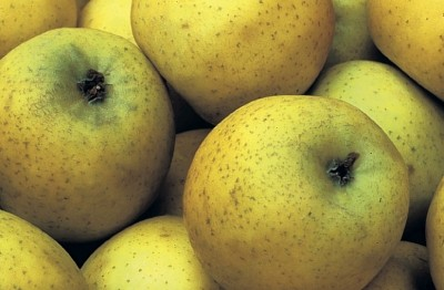 http://www.museum.agropolis.fr/pages/expos/aliments/fruits_legumes/images/pomme1.jpg